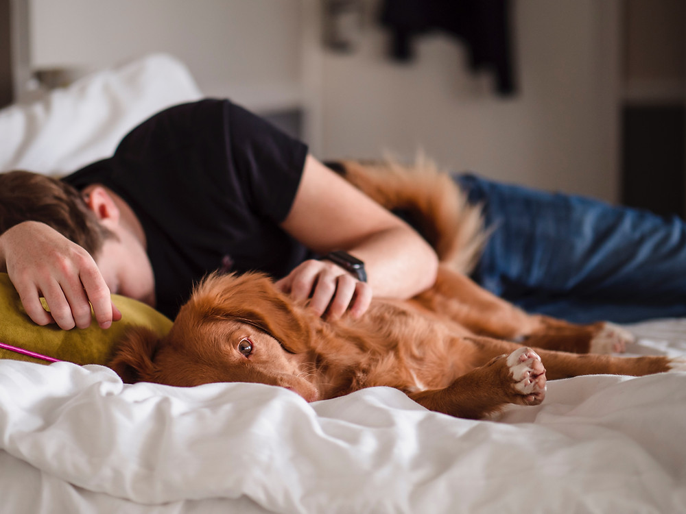 Loyal dog laying with his sleeping business owner, owner