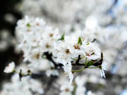 Almond Tree Guide: How to Plant and Grow an Almond Tree