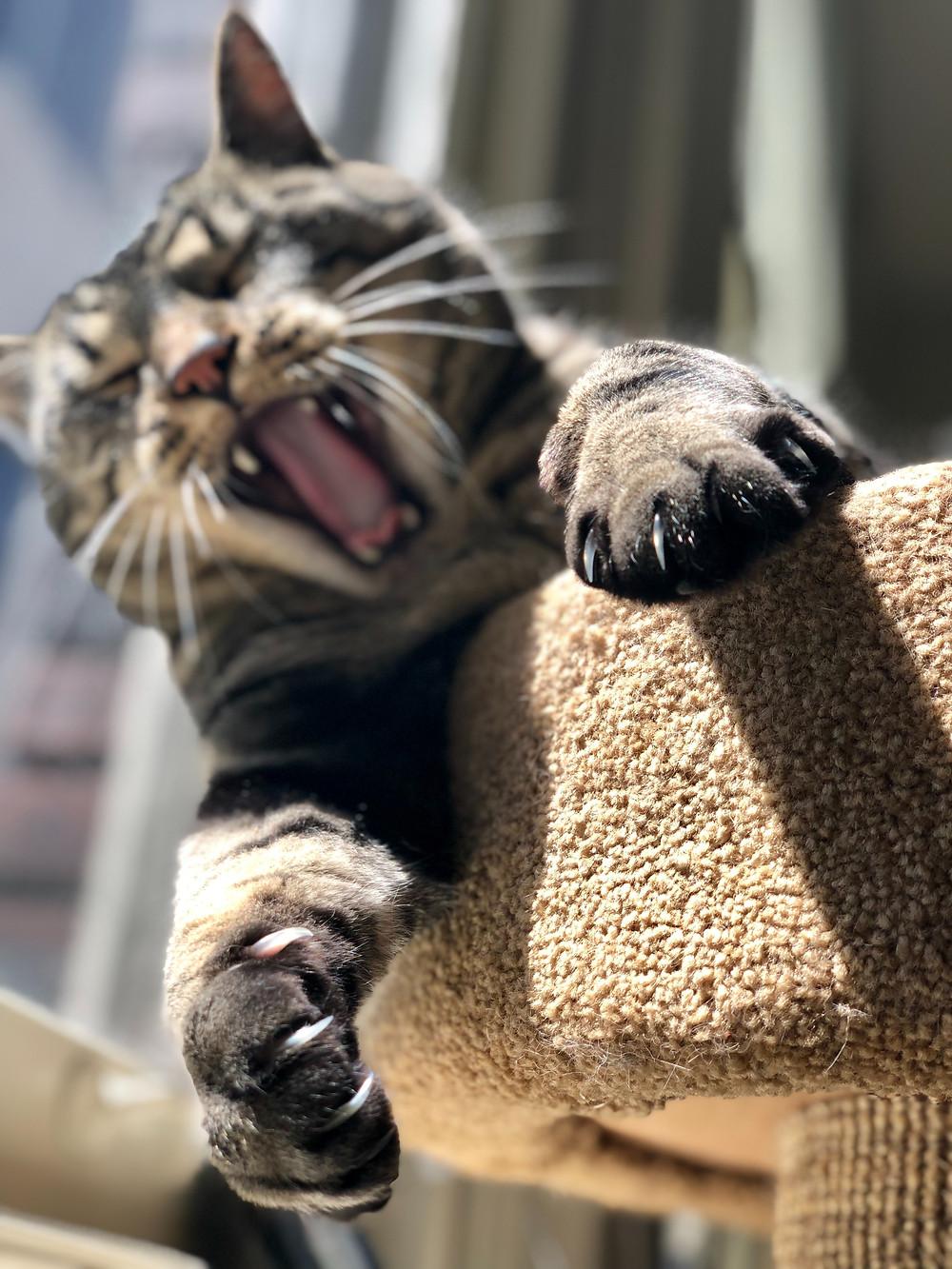 Cara Memotong Kuku Kucing Paling Aman Supaya Tidak Berontak