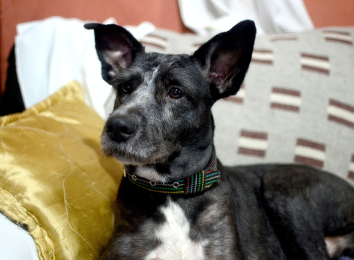 Optimiser les apprentissages chez le chien