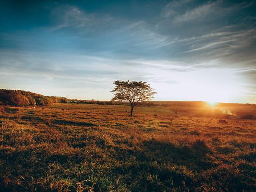 Cerrado: o segundo maior bioma do Brasil