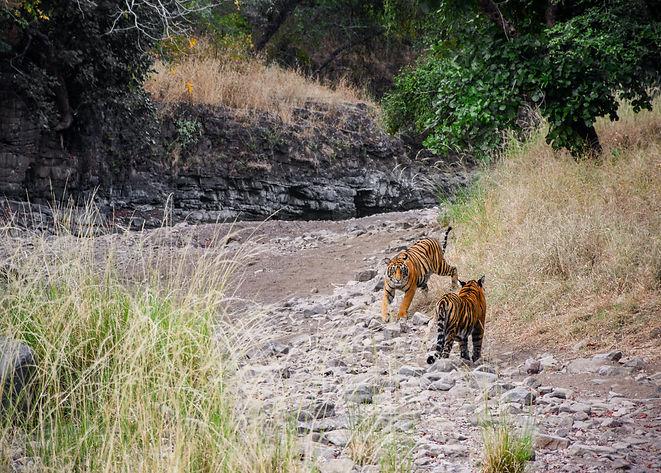 Image by Yash Gupta