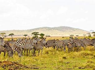 Image by Maasai Magic