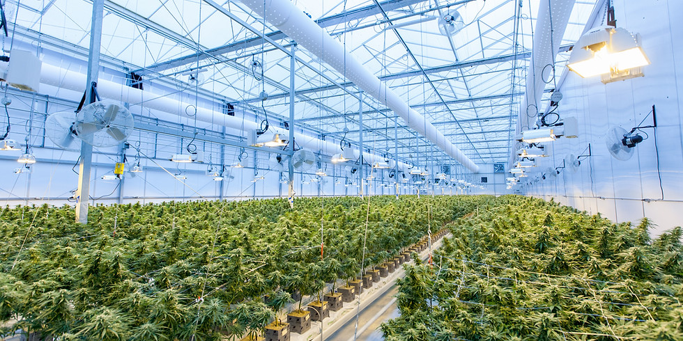 Michigan Cannabis Insider
