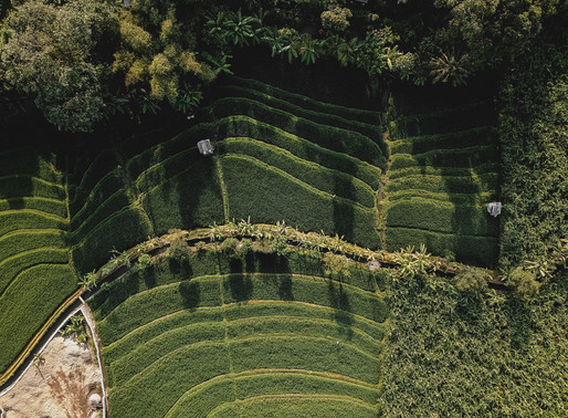 Papuan Rice Terrace