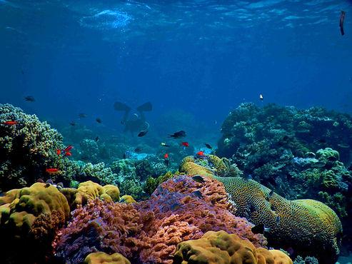 Image de Biorock Indonesia