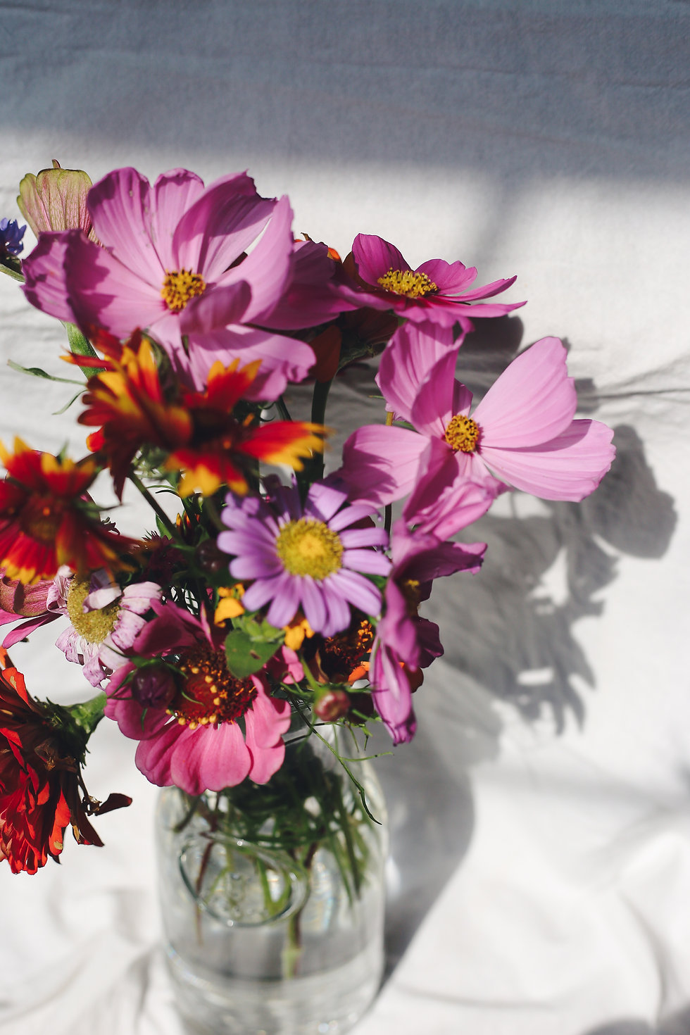 Cut Flowers, Plants, Arrangements & Compositions