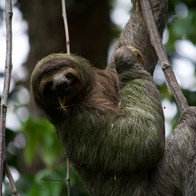 Work with sloths