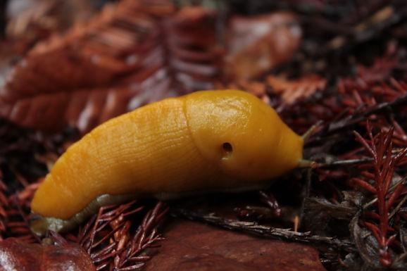 Slug Facts