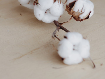 Does organic cotton have an undeserved bad reputation?