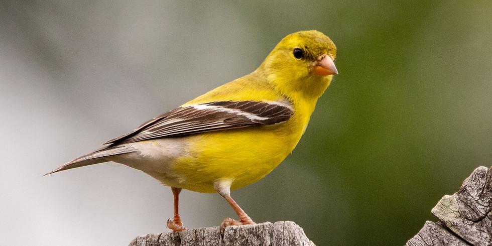 Birding different habitats in the Beaver Valley