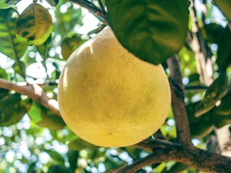 Gung-Ho for Grapefruit