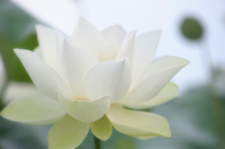 Image by he zhu