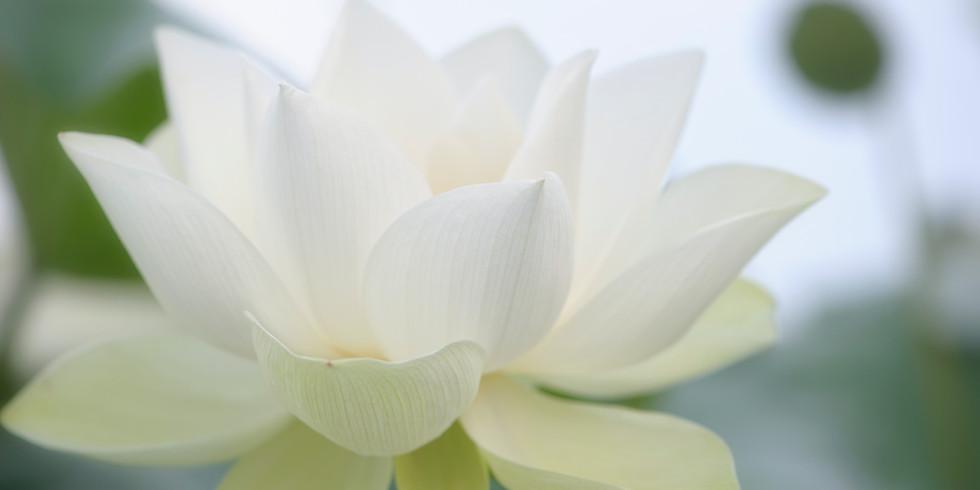 Heart & Soul Harmony Retreat