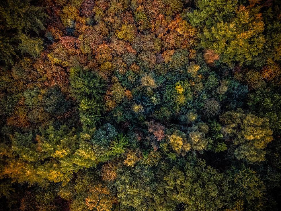 Image by Yulian Alexeyev