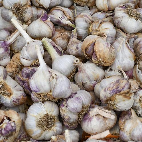 Pehoski Purple Garlic