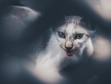 Inilah Penyebab Dan Cara Mengobati Scabies Pada Kucing