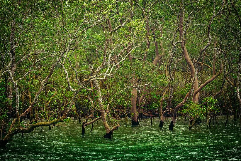 Image by Maitheli Maitra