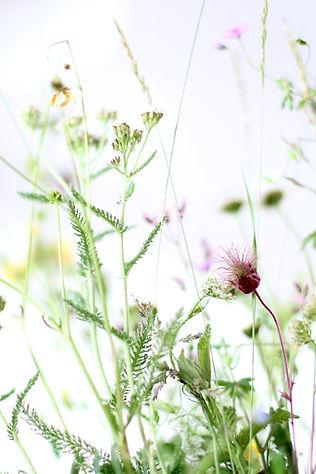 Image by Katrin Hauf