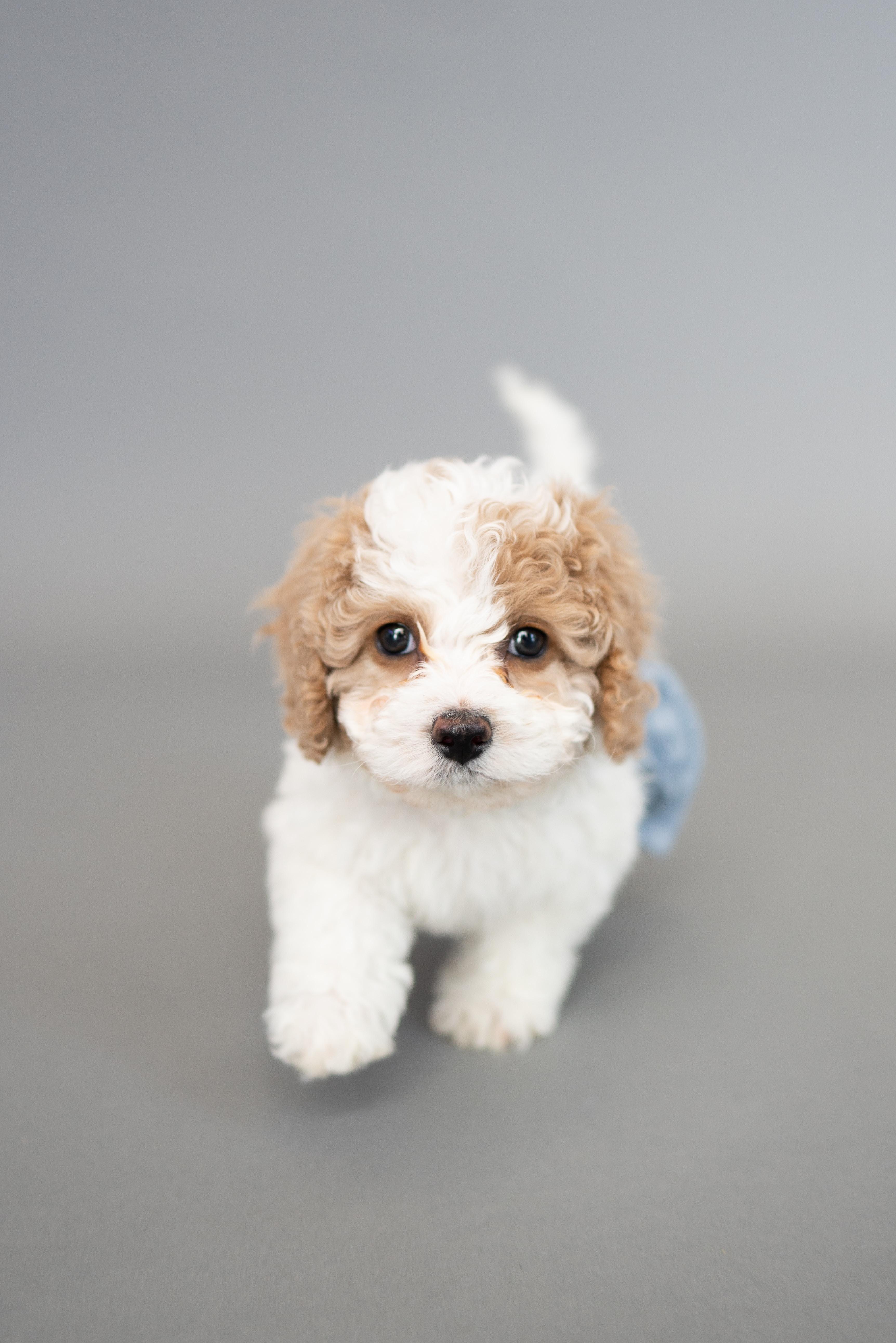 Puppy skills boost- 31/07