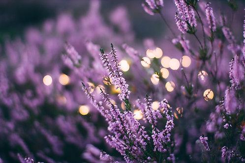 Lavender - 10oz Candles