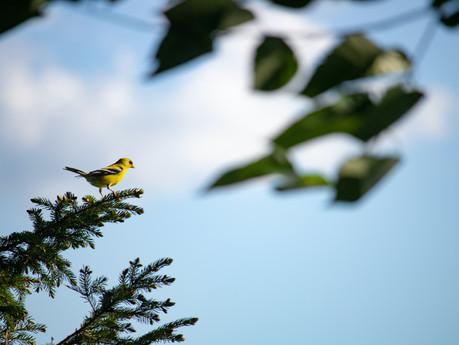 Helping birds beyond the feeder