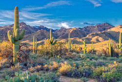 8 AMAZING THINGS TO DO IN SAGUARO NATIONAL PARK - Earth Trekkers