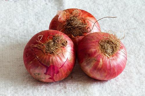 Onion - प्याज़
