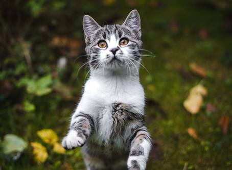 Cat bite abscess.
