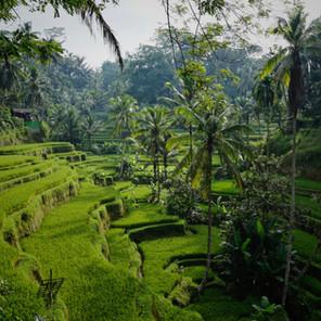 Guía completa de Ubud y alrededores