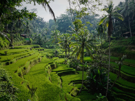 I Got Lost When Traveling To Ubud, But It Was The Most Memorable One