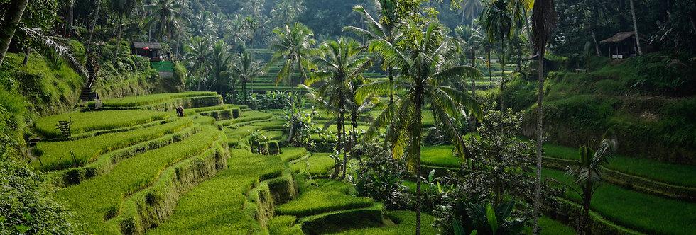 Bali: Pago de Inscripción