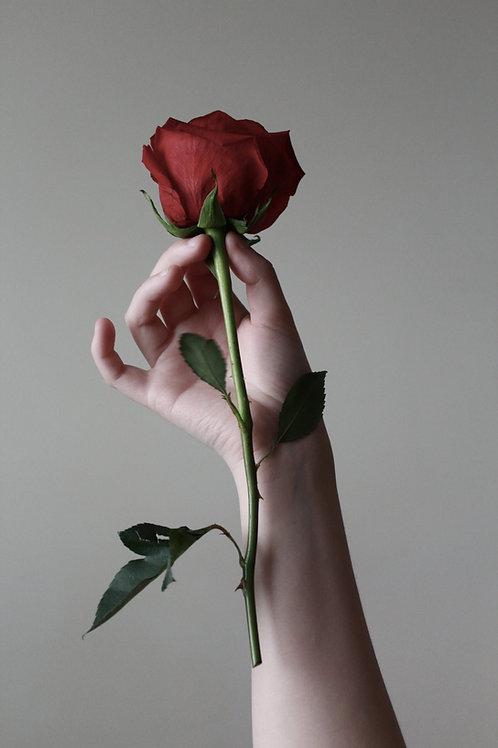 Rose rot langstiel- einzeln