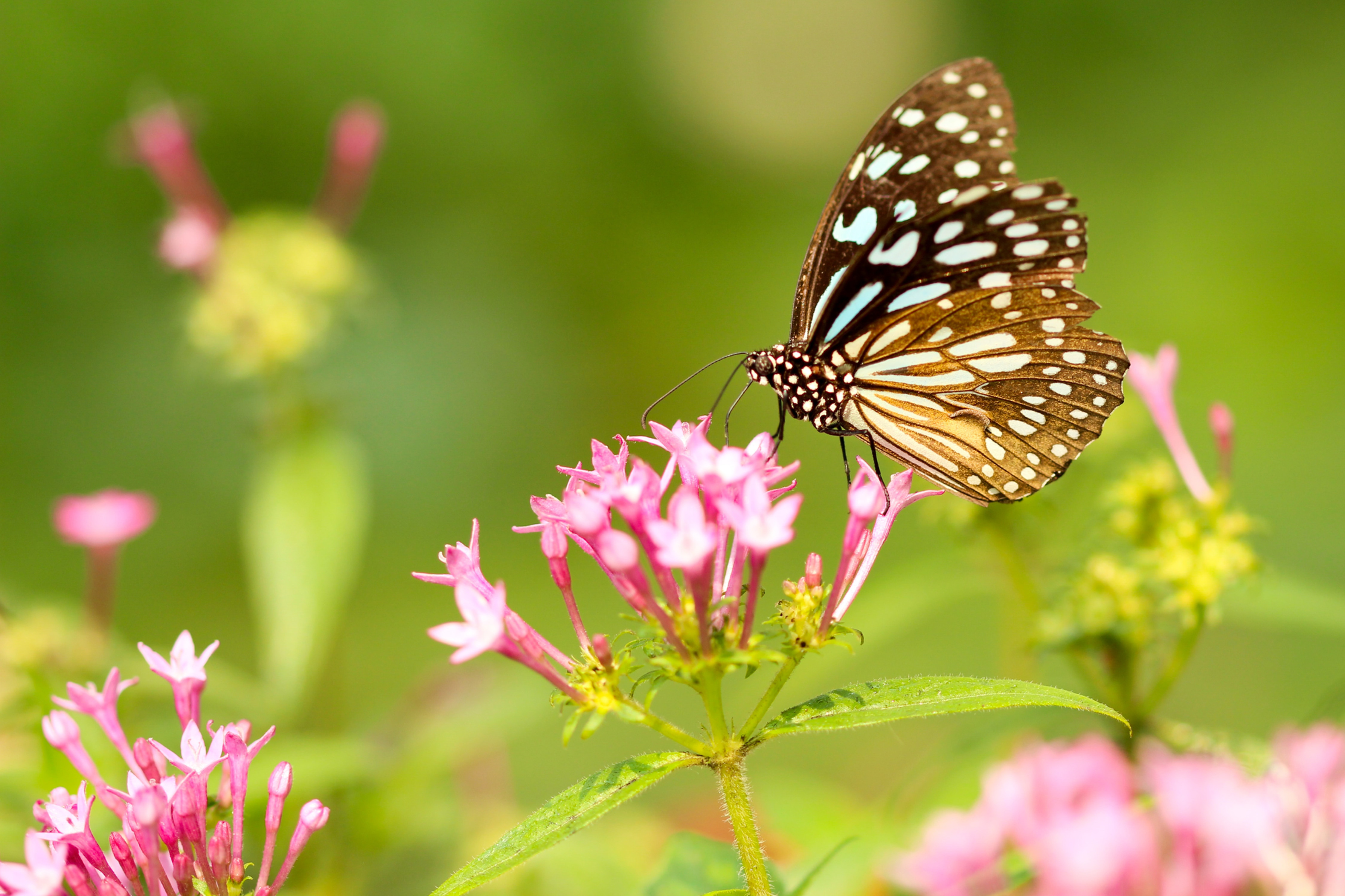 Beautiful Butterfly Image Transformation