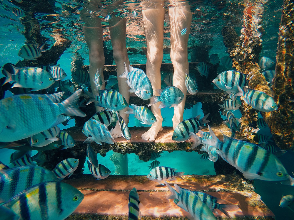 Two sets of legs standing on underwater steps surrounded by fish
