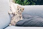Πρώτες Βοήθειες για Ζώα Συντροφιάς