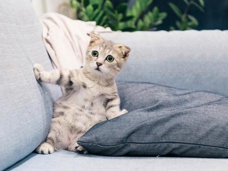 Penyebab Kutu Kucing dan Cara Menghilangkannya Dengan Mudah