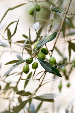 Olives de la torres