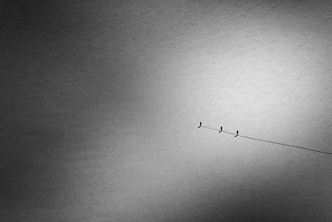 Image by Ricardo Frantz
