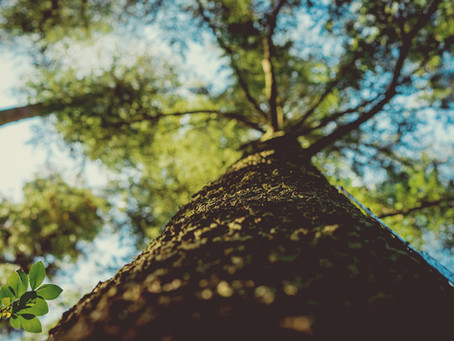 Choosing The Right Sized Trees For Your Landscape