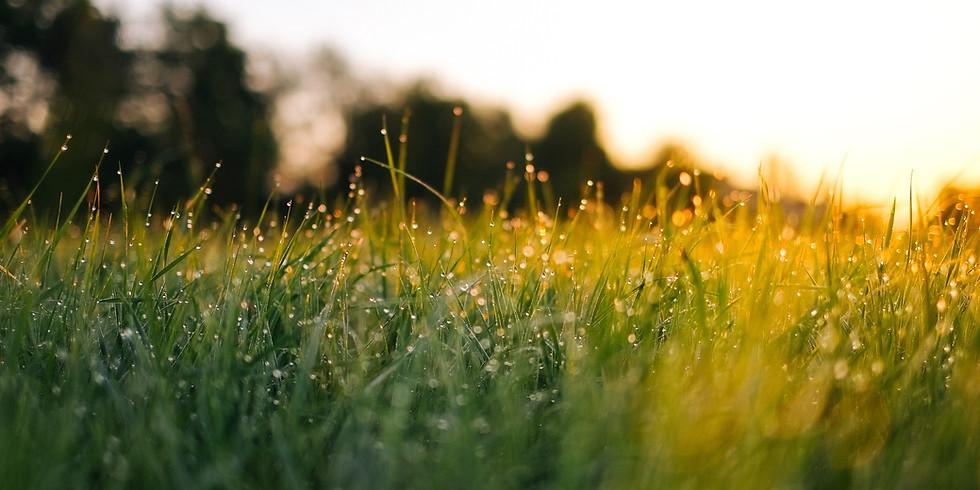 הטבע הוא אחד | בוקר שישי עם אילנה רוגל 07/02/20