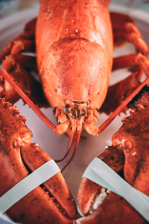 CORNISH HAND PICKED LOBSTER MEAT 150G
