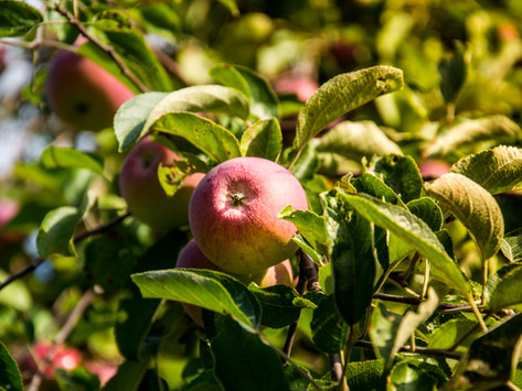 A Beginners Guide To Growing Fruit In Your Garden