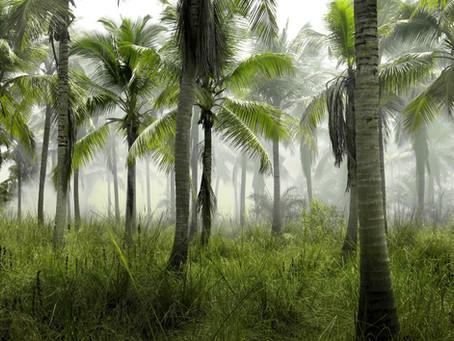 Amabilis rejoint la tribu Welcome To The Jungle 🌴