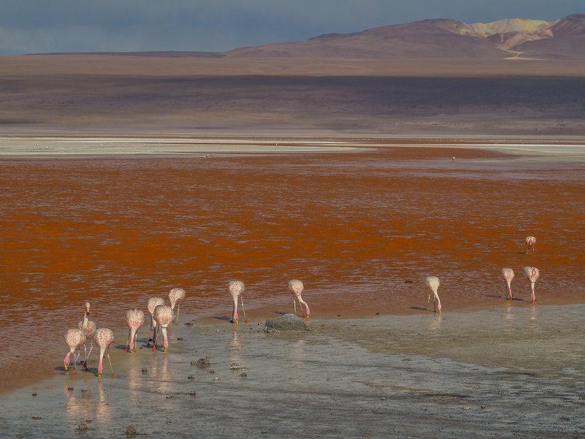 Tupiza san pedro d'Atacama