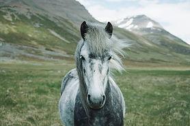 Image o a horse