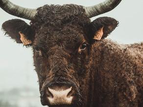 O que um touro pode te ensinar sobre o seu poder interno?