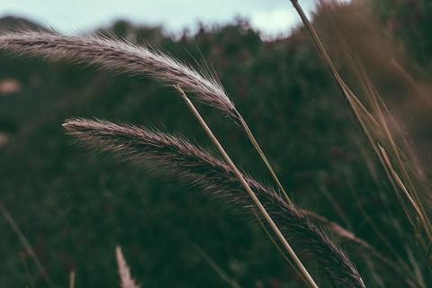 Image of grasses