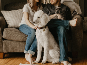 An Interior Designers Guide to living with Pets
