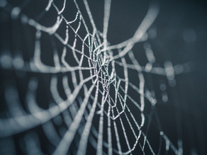 1 Million Spiders Make Golden Silk for Rare Cloth